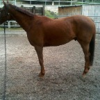 OTTB eventer before CS