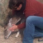 Pet deer gets some craniosacral
