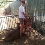Mini Donkeys from Folsom Zoo